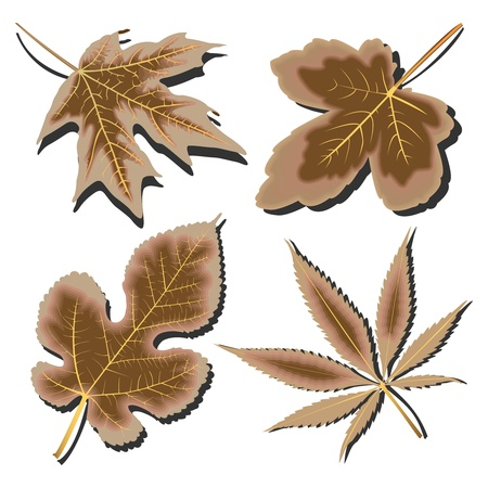 dry leaves collection against white background, abstract vector art illustration