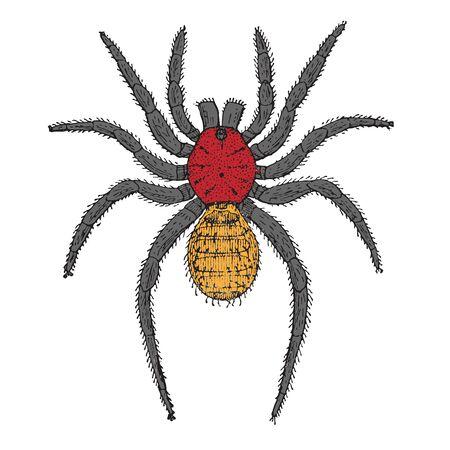 spider cartoon, abstract vector art illustration Imagens