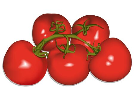 tomatoes against white background Vector
