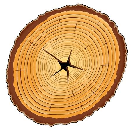 cruz de madera: secci�n de cruz de madera sobre fondo blanco, ilustraci�n, arte, abstracto vector, contiene la imagen de transparencia