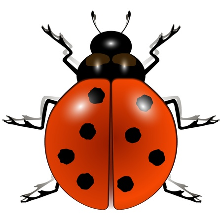 ladybug against white background, abstract vector art illustration; image contains transparency