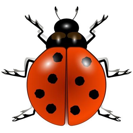 lady bug: Marienk�fer gegen wei�en Hintergrund, abstrakte Vektorillustrationen; Bild Transparenz enth�lt
