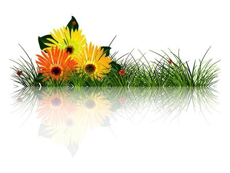 白い背景の緑の草、花、てんとう虫の反映
