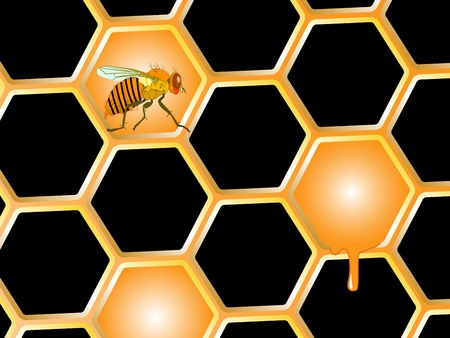 bee and honey, abstract art illustration