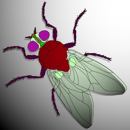 musca domestica: fly cartoon, abstract vector art illustration; image contains transparency
