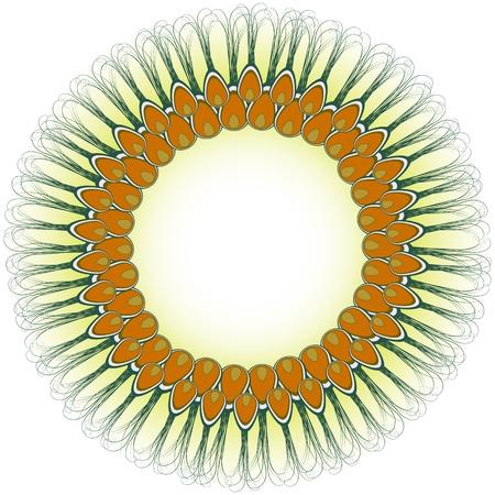 showoff: peacock design, abstract vector art illustration