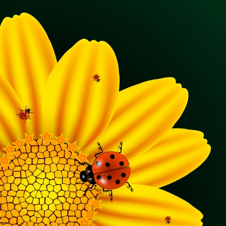 chamomile and ladybugs over dark green background, abstract vector art illustration; image contains gradient mesh and transparency Vector