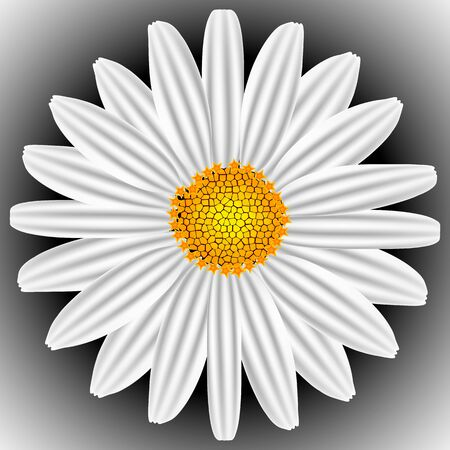 white chamomile, abstract vector art illustration; image contains gradient mesh
