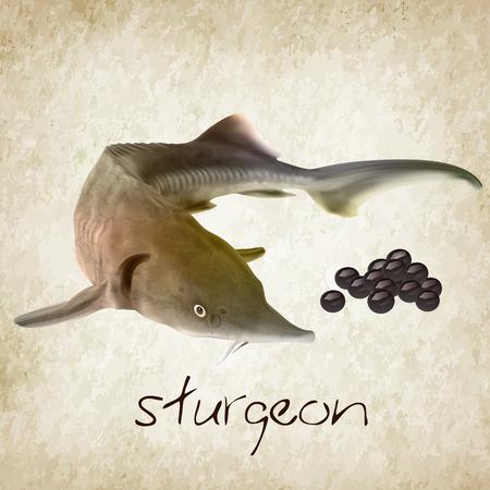 realistic sturgeon vector illustration with caviar Stock Illustratie