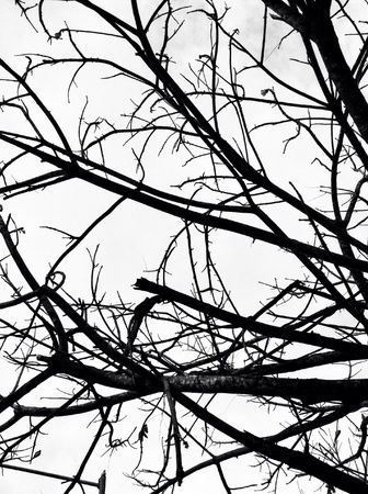 deflowered and careless one tree in black and white