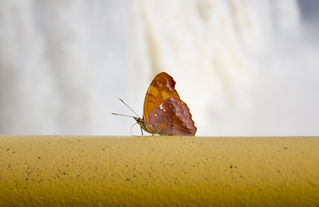 Butterfly - Iguassu Falls Brazil Stock Photo
