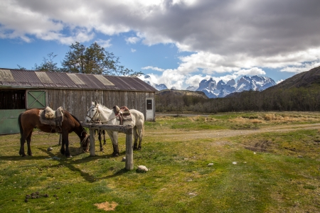Horse and Stable - Torres del Paine Chile Stock Photo
