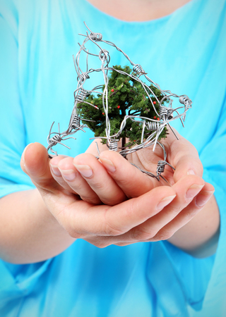 Stop cutting down forests   A woman holds on hands small tree wrapped in barbed wire  photo