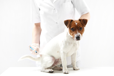 rabies: Dog on vaccination vet Stock Photo