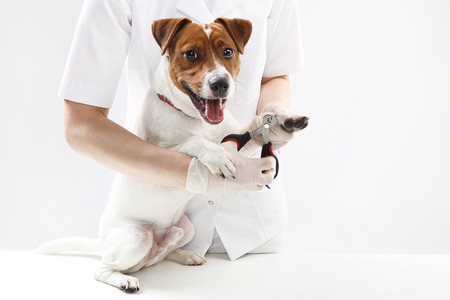 frock coat: Puppy to the vet, trimming claws Stock Photo