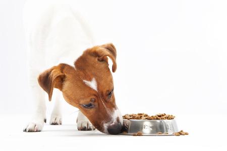 delicadeza: La vitamina delicadeza, perro dieta saludable