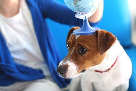 invents: Jack russell terrier dog with a globe held to his head.