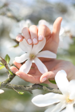 women subtle: Cherry blossoms beauty and delicacy. Female hands on a background of pink cherry blossoms Stock Photo