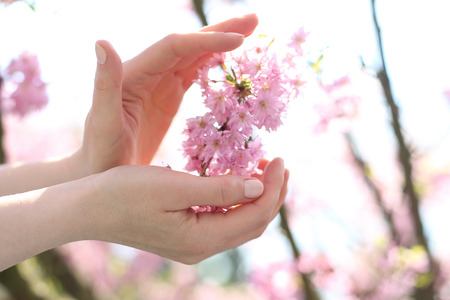 women subtle: Female hands on a background of pink cherry blossoms