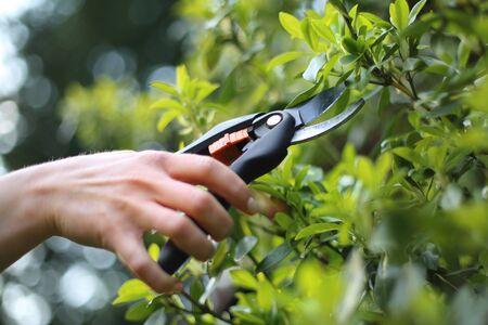 pruning shears: Garden tools pruning shears. Woman cut green bush clippers in the garden