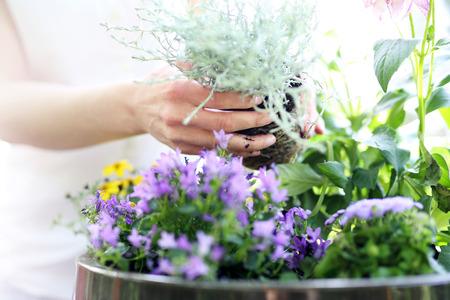 Bloemensamenstelling violette kleur. Vrouwelijke planten in potplanten die een mooie bloemsamenstelling vormen