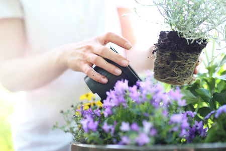 jardines con flores: Plantas femeninas en plantas de maceta formando una bella composición de flores