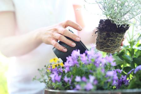 Weibliche Pflanzen in Topfpflanzen bilden eine schöne Blume Zusammensetzung