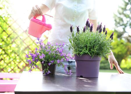 regando plantas: Regar las plantas. La mujer regando las plantas en el jardín. Foto de archivo