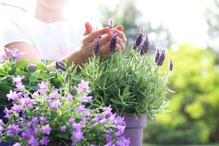 私の美しい庭のラベンダーの花アレンジメント