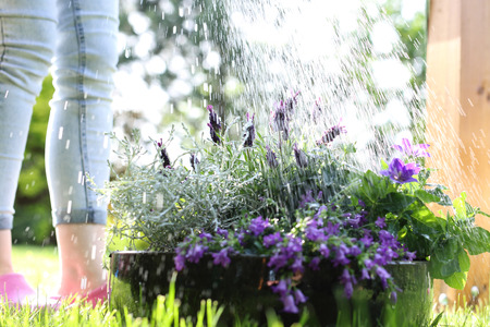 watering the garden photo