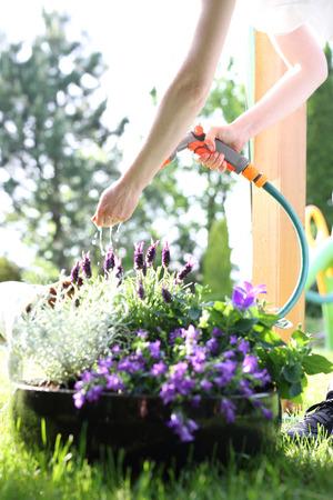 regar las plantas: plantas de riego