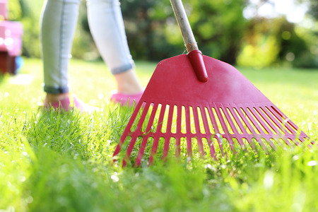 plunder: How to cultivate lawn. Stock Photo