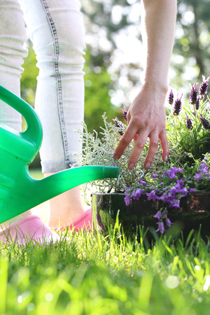 regar las plantas: Regar las plantas. La mujer regando las plantas en el jardín. Foto de archivo