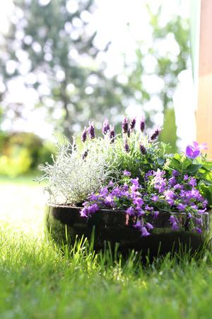 plant hand: Floral composition violet color