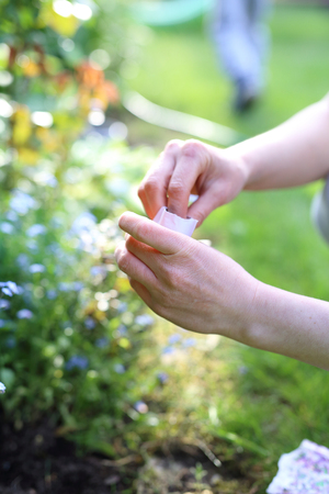 gillyflower: Flower discount. Hands gardener sowing seeds of plants in the garden spot of gardening Stock Photo