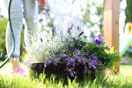 watering the garden. The woman watering the plants in the garden.