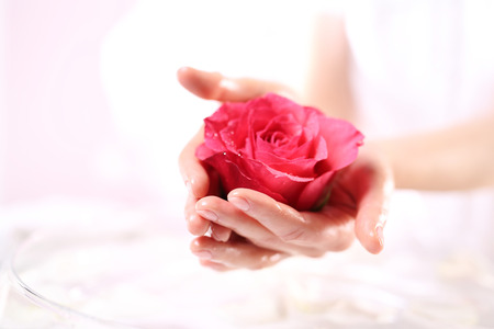 rose petal: Red rose, a symbol of beauty