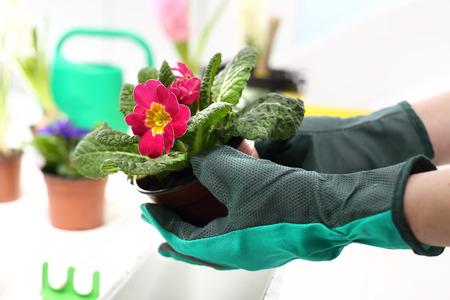 arreglo floral: La plantación de las plantas, centro de flores Foto de archivo