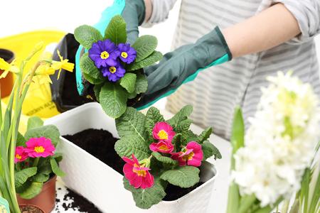 arreglo floral: coloridas flores  Foto de archivo