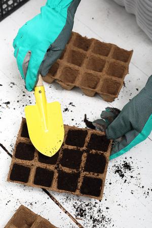 hotbed: Seeds, gardener prepares the seedlings