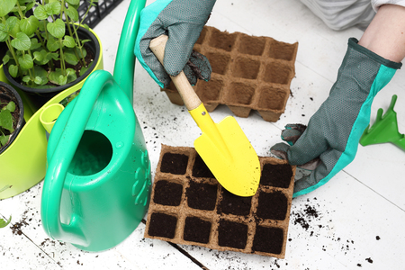 sowing: Domestic cultivation, sowing plants Stock Photo