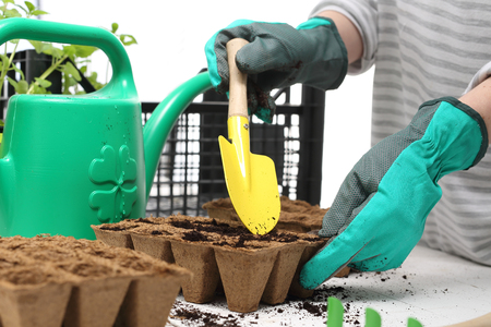 plant seed: Sowing the seeds into pots. Home cultivation Stock Photo