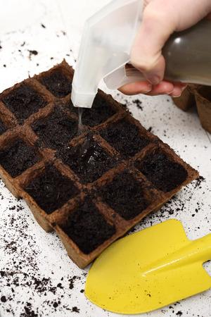 turba: Jardinero siembra las semillas se riegan y se preocupa sembrada en macetas de turba