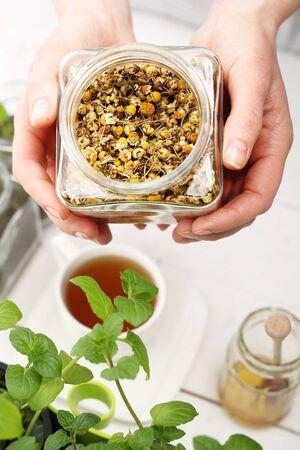 herbolaria: infusión de manzanilla de la manzanilla.