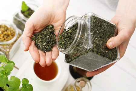 herbalist: Green composition of herbs, lemon balm and mint Stock Photo