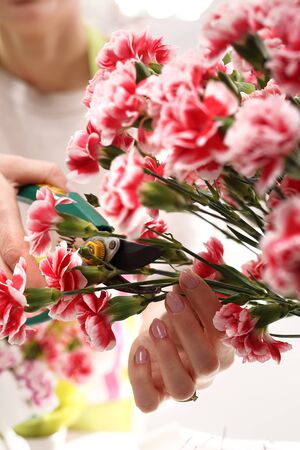 pruning shears: Pink, cutting flowers with pruning shears.