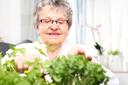 great grandmother: An elderly gray-haired woman cut green shoots of herbs.