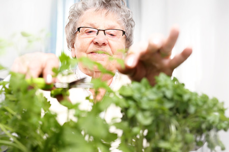 great grandmother: Green windowsill, cultivation herbs at home.