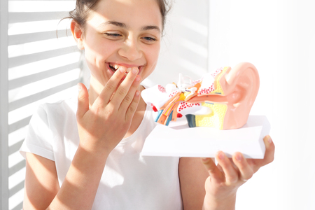 eardrum: How is made the human ear? The girl is watching a model of the human auditory Stock Photo