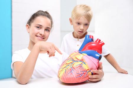 teaching aid: Humans anatomy. Children watch a model of the human heart